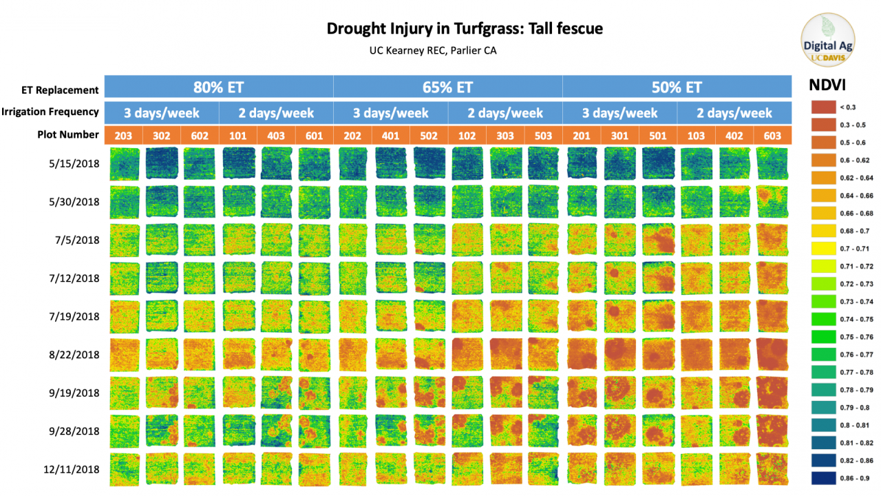 Drought Injury in Turfgrass by NDVI over time