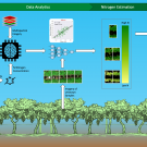 REmote Sensing for Nitrogen in Grape - Digital Agriculture Lab